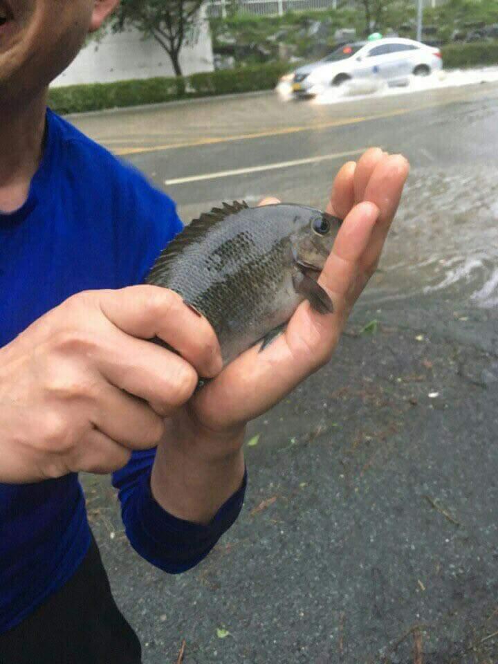 #소금절임 #마린시티 #활어축제  도로에 물고기들이... https://t.co/ipki9mVDA5