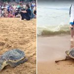 Rescued sea turtles return home to the roar of their own cheering section https://t.co/zZYdtgEsao https://t.co/CytiEhvTRj