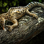 How a strange Triassic reptile could change what an arm looks like https://t.co/lGDcWTtobM https://t.co/XkcB6Pdzhm