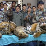Laos promises to phase out tiger farms: Conservation groups