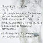 #Norway, home to a diversity of wildlife...or not. @NorwayUN #SaveOurWolves #verdtåbevare  https://t.co/TutpkNEJZw