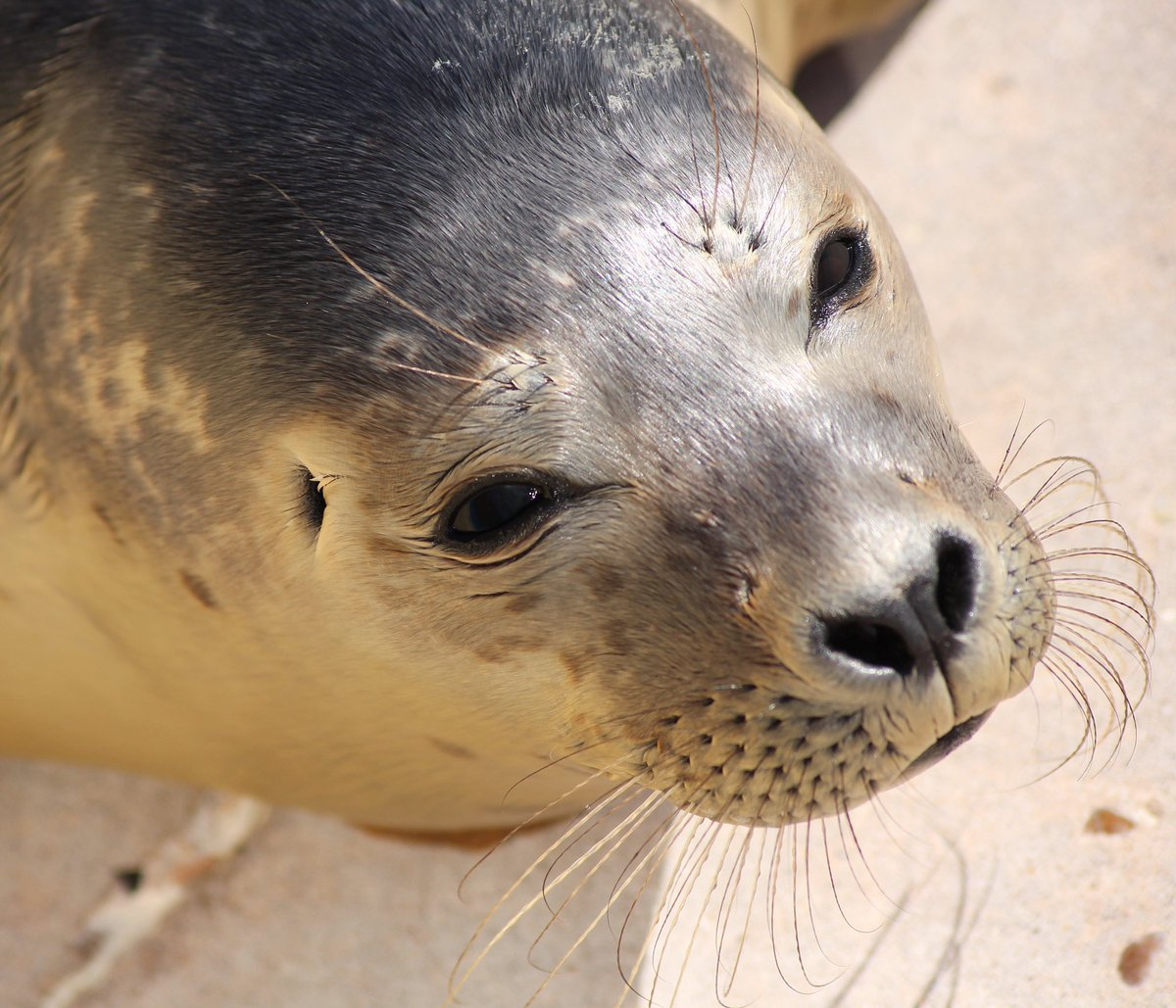 #photography #nature #sealsanctuary #skegness #lincolnshire Natureland Seal Sanctuary @LincsHour @explincolnshire https://t.co/IRCcl7Ku9P
