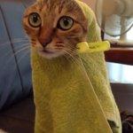 después de la ducha otras vs yo https://t.co/PrCzCzGiNc