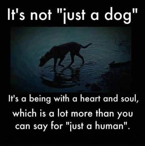 There's no such thing as 'just a dog.' #dogsarelove https://t.co/tNcMBzA3qr