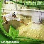 Solo en Revolución Bolivariana es posible Fortalecer el Desarrollo Productivo Agrario @MinPPAPT #DuplicamosLaCosecha https://t.co/87h1kYEwY2