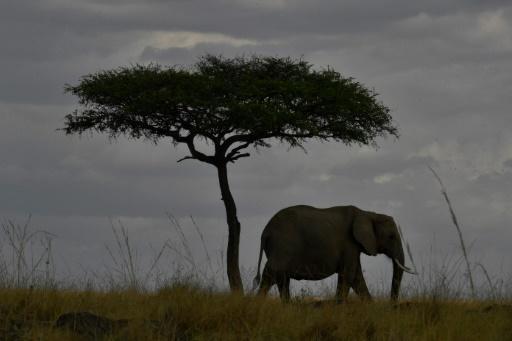 Afrique du Sud: ouverture d'une conférence mondiale sur les espèces menacées https://t.co/kNJWA6Dxto