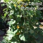 The Coolest #Portland Garden Ever! #Portland #pdx https://t.co/ZJKhfJokZ9 https://t.co/8BTz2uUgiQ