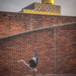 Heron flying off with their breakfast in Gas Street Basin, feat. @LibraryofBham #Birmingham #HungryHeron https://t.co/fJ7de9Tyq5