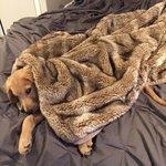 quand il fait froid et que tu veux pas sortir de ton lit https://t.co/2Lo1TMUAUJ