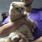 #Киев заберите себе вислоухого персикового красавца!  Добрый и ласковый котик ищет любящую семью! Он очарователен😻 https://t.co/e7KOwtZd2R