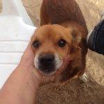 Dob perro de 12 años en #adopcion en #Madrid 635032559 https://t.co/vK69H2HqGZ