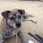 Gus perro de 10 años en #adopcion en #Madrid 635032559 https://t.co/jjVzNFsH7y