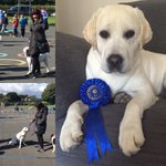 A great afternoon at the Strabally Co #Waterford dog show Tilly came second #SoProud https://t.co/QFPgdUCQWI