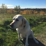 What a beautiful day in #yeg #smudge enjoying as well. Perfect day for a walk... https://t.co/HM7eSZe9A9