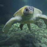 Cada vez que usas el hashtag #Tortugatón en redes sociales, estarás apoyando la conservación de las tortugas marinas https://t.co/T6OMIZE5j0