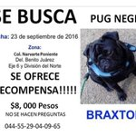 Se solicita su colaboración (RT si es posible):  #BuscandoABraxton https://t.co/1Y67tQzEVZ