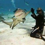 """เมื่อฉลามทักทายนักประดาน้ำ เหมือนเป็น..""""เพื่อนสนิท"""" https://t.co/c5rA2sLfK0"""