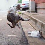 カンフー猫が成長して動きが洗練されている pic.twitter.com/KqwRvDW91Q