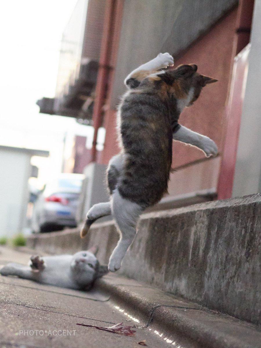 カンフー猫