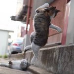 カンフー猫が成長して動きが洗練されている https://t.co/KqwRvDW91Q