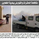 حملة مكثفة لمكافحة الحشرات والقوارض ببلدية #الظعاين #قطر #Qatar https://t.co/2WeeOzixNU