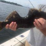 米ニュージャージー州のラリタン湾で、身体をガッツリ食われても治癒して生き延びた魚が釣り上げられるpa…