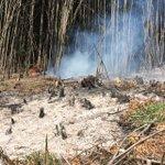 Concepción, incendio forestal en ruta a Cabrero frente al Punto y Coma. Bomberos trabaja en el lugar. #cat8 https://t.co/75wYmOwx0E