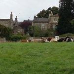 Walkers & dog owners beware! The cattle are back in Bathwick Fields. @NTBathSkyline @BathEcho @BathChron https://t.co/p8SIbfG1EA