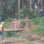 Lota, ruta 160 sector Chivilingo árbol caido en calzada. Bomberos en ruta. Fotos @MarceloCoMa #cat8 ^196 https://t.co/m33fuhlNct