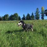 Seen Blue? Female dog last seen Sept 24, 3rd Line & Hwy 22 area #Erin. Wearing purple collar w/ contact info https://t.co/P4X5OLctIU https://t.co/nehfNgKnuD