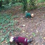 Good evening #lichfieldlocal a bit of a soggy start but dogs were dry. Ha ha 🙊 https://t.co/cfiDw9mTWl