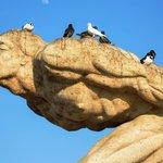 #Trujillo: palomas en plaza de Armas constituyen un riesgo para la salud https://t.co/PNWgS92BwN https://t.co/jOOmn8ntoz