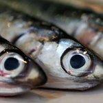 Vandaag het best gelezen: Waarom duurzame makreel een comeback maakt bij Lidl https://t.co/UEWMNr3nUq https://t.co/QYmA1hEXi5