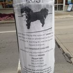 Who steals a dog?! Saw this today posted. Was stolen at King & James. Please read and RT. #bringSammihome #hamont #sosad https://t.co/WhB2aZZwc0