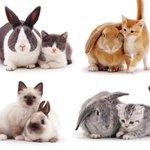แมวกับกระต่ายที่เหมือนกันยังกับแกะ…เอ่อ คู่แฝด Twins!  ภาพจาก: bored panda https://t.co/jQsYktAuvs
