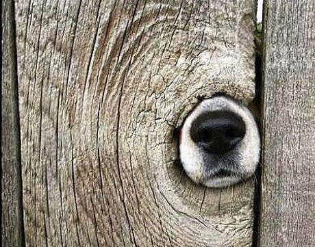 And here we have a rare specimen of dogwood. https://t.co/CjHS7zcbhm