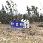 Cuidador de fundo mató de escopetazo a sujeto que robaba hortalizas en #LaSerena https://t.co/SWVsX6v6hl #Coquimbo https://t.co/5moDuXuVGI