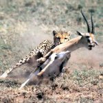 6-days-treasures-tanzania-safari info@africajoytours.com https://t.co/j3PKT1vUj9
