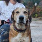 Το βλέμμα του σοφού σκύλου που τα έχει ζήσει όλα.Εγκατάλειψη,πείνα,αρρώστια κ έχει βγει νικητής.Ο μοναδικός Κανέλλος για υιοθεσία.6944949741 https://t.co/NroUOHVd6V