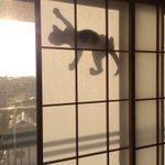 西日が凄いので障子を半分くらい閉めてたんだけど、網戸を猫が登っていてその西日に照らされたシルエットっ…