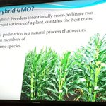 """Je hybrid ni GMO? Mtaalam Adolf Saria anajibu HAPANA mahindi haya ni """"chotara"""" siyo GMO #ChangeTanzania https://t.co/1GzhH8dY4L"""