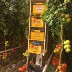 @PvdAnh PvdA fractie op werkbezoek bij Agro care duurzame tomatenteler Middenmeer. Grootste teler van Nederland. https://t.co/Lcty2swdIm