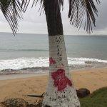 """Acusan al PPD de """"vandalismo"""" en palmeras de Aguada https://t.co/VdUinbtyJE #RI1320 https://t.co/ocw9CvZK6v"""