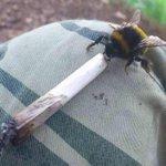 mas quando o beck é bom a abelha sempre volta https://t.co/3TdPuKUtTi