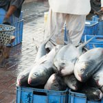 Seafood Fraud: The Turning Tides of an Industry Epidemic