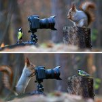 Some Russian photographer captures the cutest squirrel photo session ever #FunnyDem https://t.co/qxoblDFFk1