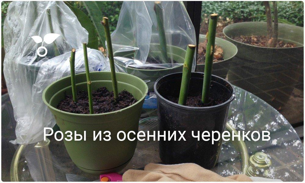 Ирина Крайнова (@kraynova_i) Твиттер