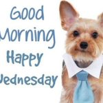 Good Morning! Happy Wednesday! #Wonderful #Wednesday #WeLove #Dogs #Puppies #Rescue #Adopt #EdenGarden #Mississauga https://t.co/CudsgFtXWH