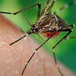 First #Zika, now #dengue. New case pops up in #Miami area https://t.co/SsS5endtqP https://t.co/DZ8Ez3D0iU
