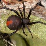 'Homem mais azarado da Austrália' leva pela segunda vez picada de aranha no pênis | Pagenotfound